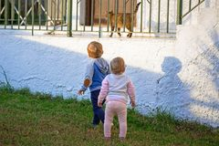 Little boy and girl twins. Run by the cat Royalty Free Stock Images