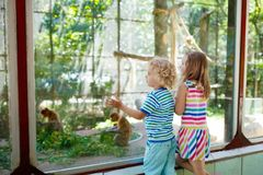 Boy and girl with monkey at zoo. Kids and animals. Little boy and girl watch funny macaque monkeys on day trip to a zoo. Kids watching wild animals at wildlife Stock Image