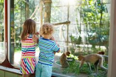 Boy and girl with monkey at zoo. Kids and animals. Little boy and girl watch funny macaque monkeys on day trip to a zoo. Kids watching wild animals at wildlife Stock Photo