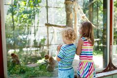 Boy and girl with monkey at zoo. Kids and animals. Little boy and girl watch funny macaque monkeys on day trip to a zoo. Kids watching wild animals at wildlife Royalty Free Stock Images