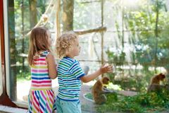 Boy and girl with monkey at zoo. Kids and animals. Little boy and girl watch funny macaque monkeys on day trip to a zoo. Kids watching wild animals at wildlife Royalty Free Stock Photos