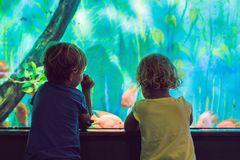 Little Boy and girl watching tropical coral fish in large sea li. Fe tank. Kids at the zoo aquarium royalty free stock image