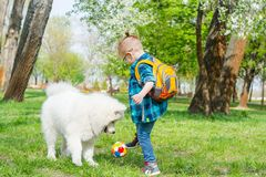 A little boy with glasses plays a ball with a white dog near flowering trees in spring stock images