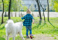 A little boy with glasses plays a ball with a white dog. A samoyed dog and a little hipster run through the park on the grass stock image