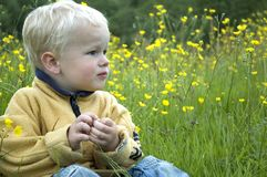 Little boy between grass and flowers. A 3 year old sitting in the grass and between buttercups stock image