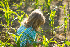 Little boy in green cornfield. Cute little boy with long blond hair sits in green cornfield on sunny summer day on natural background Royalty Free Stock Photo