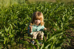 Little boy in green cornfield. Cute little boy with long blond hair sits in green cornfield on sunny summer day on natural background Royalty Free Stock Photography
