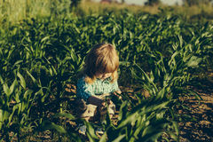 Little boy in green cornfield. Cute little boy with long blond hair sits in green cornfield on sunny summer day on natural background Royalty Free Stock Photos