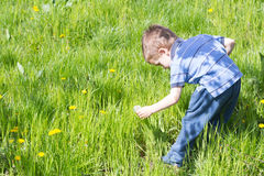 Little boy in green field. With blow ball Stock Photo