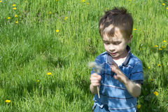 Little boy in green field. With blow ball Stock Photography