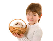 Little boy with guinea pig Stock Image