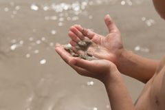 Little boy hand holding hermit crab in shell on the beach Royalty Free Stock Photo