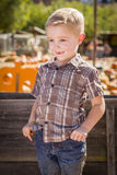 Little Boy With Hands in His Pockets at Pumpkin Patch Stock Image