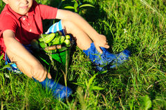 Little boy harvesting cucumbers in garden Stock Image