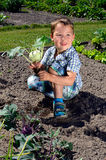 Little boy harvesting turnip greens Royalty Free Stock Images