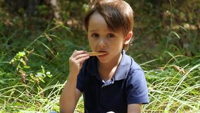 A little boy has a snack while resting in the park. A child eats a slice of pizza. stock video