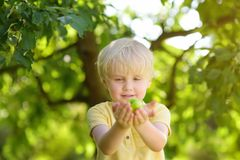 Little boy having fun with apple in domestic garden royalty free stock photos