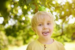 Little boy having fun with apple on head in domestic garden royalty free stock image