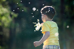 Little boy having fun with dandelion seeds Stock Images