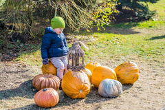 Little boy having fun with pumpkins on pumpkin patch on farm Stock Photo