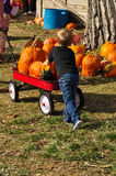 Little boy helping haul away pumpkins at the pumpkin patch Stock Image