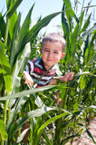 Little boy hide in corn Royalty Free Stock Photos