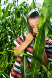 Little boy hide in corn Stock Image