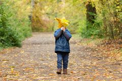 Little boy hiding behind an armful of yellow leaves. Autumn forest. Stock Photos