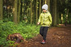 Little boy hikes in green forest. Boy walks in forest outdoor. Children hiking. Child hiker on path in green woodland royalty free stock photo
