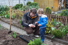 Little boy and his father planting seeds in vegetable garden Stock Images
