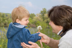 Little boy and his father play with dandelions Royalty Free Stock Image