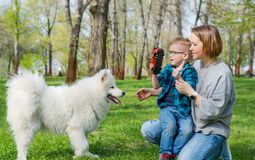 A little boy and his mom play with a fluffy Samoyed dog and in the park in spring royalty free stock photos