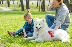 A little boy and his mom play with a fluffy Samoyed dog and in the park in spring stock image