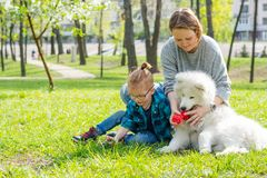 A little boy and his mom play with a fluffy Samoyed dog and in the park in spring stock images