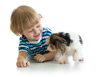Little boy and his pet dog play, isolated on white background. stock images