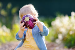 Little boy holding fresh organic red cabbage in domestic garden Royalty Free Stock Image