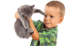 Little boy holding a gray kitten Royalty Free Stock Images