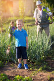 Little boy holding green onions in vegetable garden Royalty Free Stock Photos