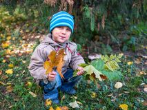 Little boy holding leaves in autumn Park royalty free stock photography