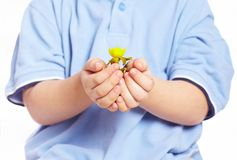 Little boy holding plant in hands Stock Photos