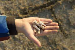 Little boy holding shells in his hand. Collecting them for makin. G jewellery. Young Biologist royalty free stock images