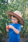 Little boy holding tomato Royalty Free Stock Image