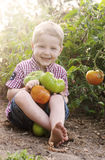 Little boy holding tomatoes Stock Photography