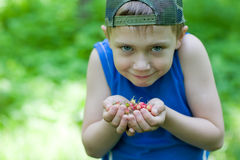 Little boy holding a wild strawberry Royalty Free Stock Image