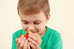 Little boy holds handful of sweet red strawberries Stock Images
