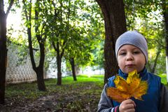 A little boy holds yellow autumn leaves in his hand stock photography