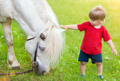 Little boy and horse Stock Photography