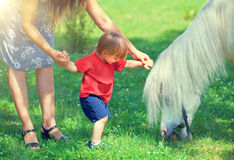 Little boy and horse Royalty Free Stock Images