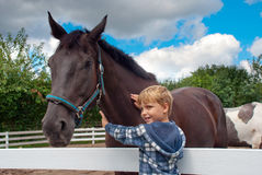 Little boy with horse. Boy stroking a brown horse Royalty Free Stock Images