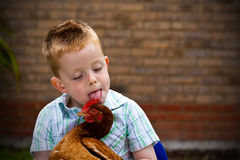 Little Boy inlaying with chicken Royalty Free Stock Photography